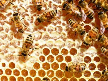 蜂蜜、養蜂製品などのベトナムからの輸入、買付け、仕入れはベトナム仕入れ.com まで
